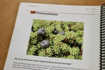 In a chapter of the CK-12 Foundation's biology textbook, an image of berries on the Yukon-Kuskokwim Tundra helps illustrate principals of photosynthesis. (Photo by Christine Trudeau/KYUK)