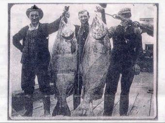 Chinook salmon on display in 1910 at Union Fisherman's Dock in Astoria, Oregon (Wikimedia image)