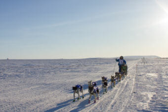 Wade Marrs, mushing along the Iditarod 2016 Trail on the outskirts of Nome. (Photo by Laura Collins/KNOM)