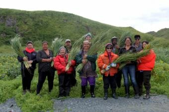 The descendants spent time gathering grass on Attu to be used in traditional baskets. (Photo by Zoë Sobel/KUCB)