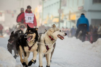 Nome musher Aaron Burmeister at the Iditarod Ceremonial Start in downtown Anchorage, March 1, 2014. Burmeister is one of the ITC board members who may be resigning soon. (Photo by David Dodman/KNOM)