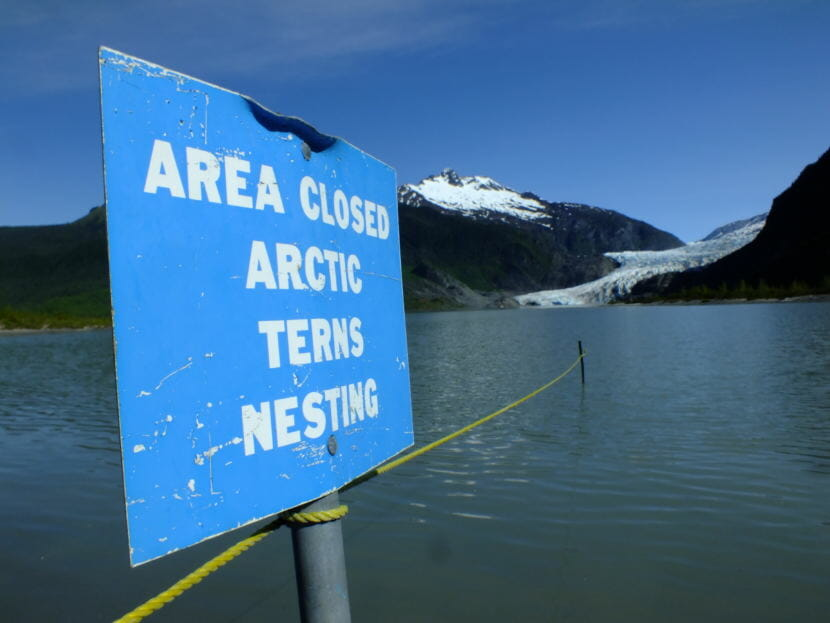 Signs and ropes mark off closed nesting areas for Arctic terns at the Mendenhall Glacier Recreation Area.