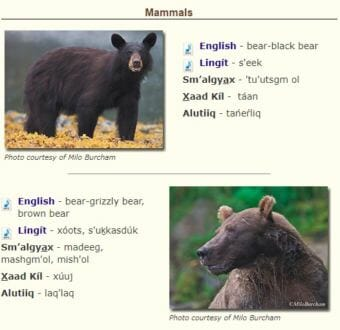A new U.S. Forest Service Alaska Region webpage showcases indigenous names for many animals native to Alaska. (Screengrab from www.fs.usda.gov)
