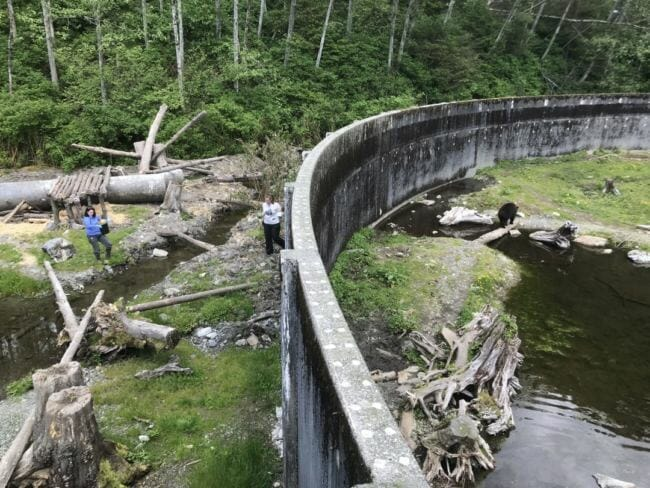 Volunteers prepare the new habitat before the bears enter. (Photos by Rachel Cassandra/KCAW)