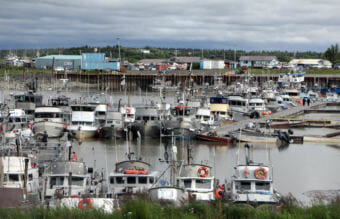 Boats tie up at Dillingham's small boat harbor on Wednesday, with many waiting to be pulled from the water at high tide. (Photo by Austin Fast/KDLG)