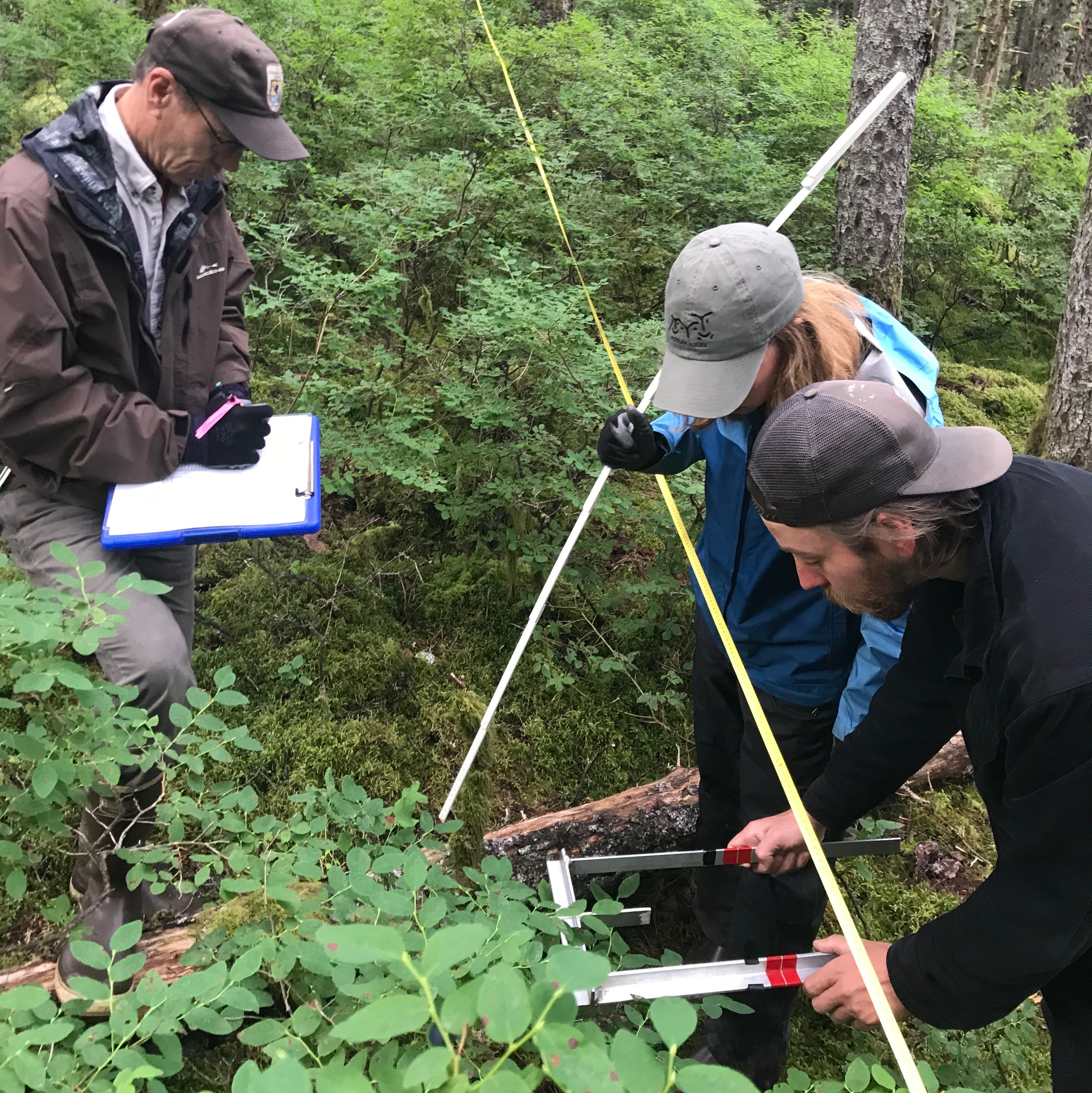 A Kodiak National Wildlife Refuge crew surveys blueberries at Abercrombie State Park in Kodiak. (Photo by Daysha Eaton/KMXT)