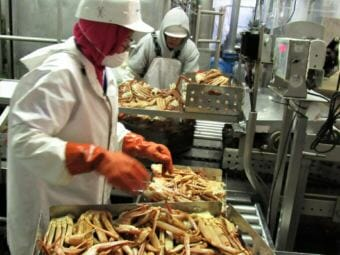 Workers sort crab at the UniSea processing plant in Unalaska.