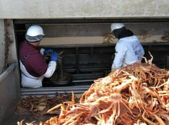 Workers sort opilio crab at the UniSea plant in Unalaska. Company officials have said they're hoping to employ four inmates during the winter fishing season.