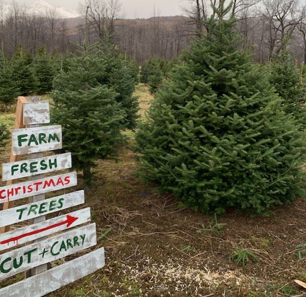 Alaska Made Theres Only One Christmas Tree Farm In Alaska Its On