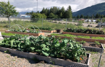 The gardens at Riverbend Elementary School in summer 2018 featured 8 beds of produce. (Photo courtesy Karen Goodell)