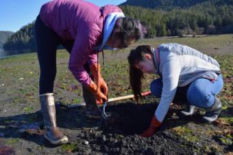 Mt. Edgecumbe High School students dig for butter clams and blue mussels in Starrigavan Estuary.