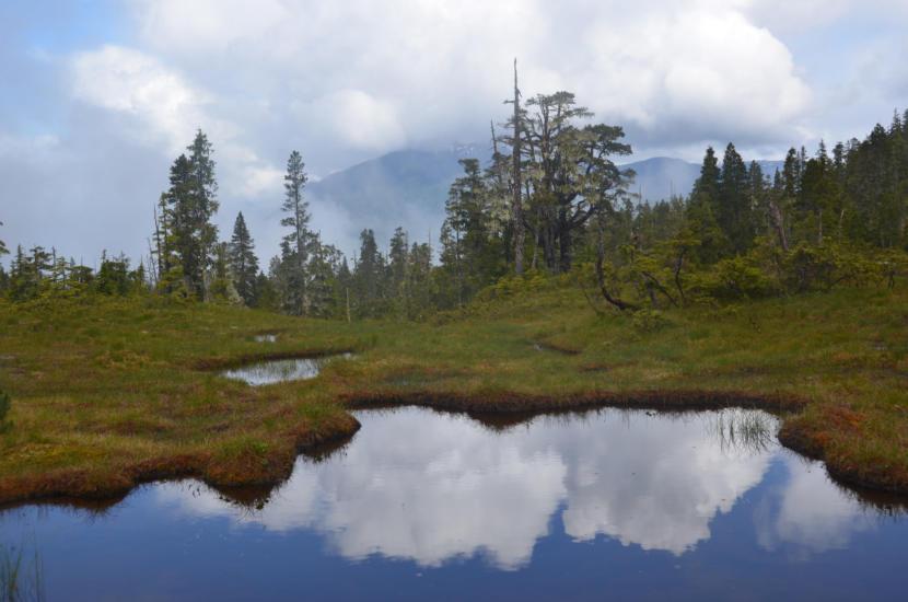 The Tongass National Forest near Wrangell, Alaska, 2016.