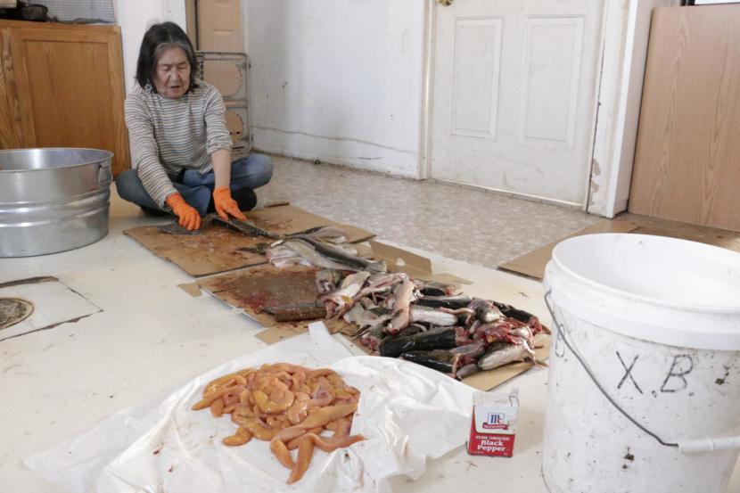 Xenia Black cuts fresh caught pike in her Eek home, rinsing the slabs with water from her kitchen sink on February 21, 2019. (Photo by Anna Rose MacArthur/KYUK)