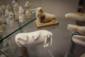 An ivory walrus on display at Maruskiya's of Nome.