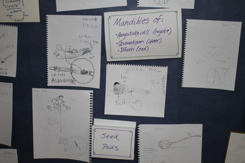 Students sketched a variety of objects including bones from animals, feathers and plants. (Photo by Henry Leasia/KHNS)