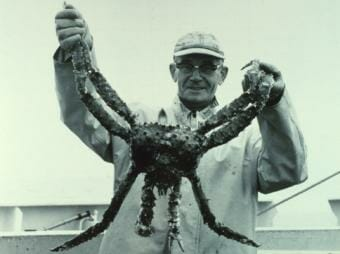 King crab caught on the NOAA ship Miller Freeman in 1967.