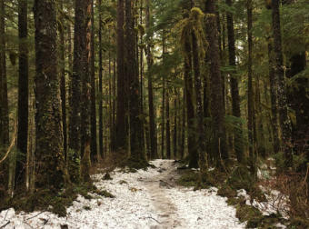 Snow built up over the winter months begins to thaw on the Windfall Lake trail in the Tongass National Forest north of Juneau.