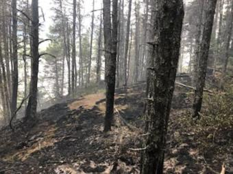A section of forest is charred by wildfire.