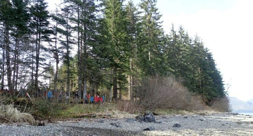 This forested area a half-mile from Hoonah's Icy Strait Point will be the site of a 500-foot floating dock to accommodate Norwegian Cruise Lines megaships visiting Hoonah.