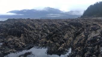 A low tide leaves shellfish exposed on a beach near Juneau. Nov. 17, 2018.