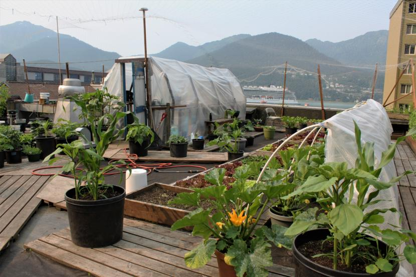 The Glory Hall's rooftop garden provides fresh produce for meals provided to homeless individuals. (Photo by Adelyn Baxter/KTOO)