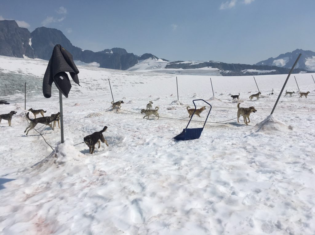 Heatwave shuts down dog sled tours early on a glacier near Skagway