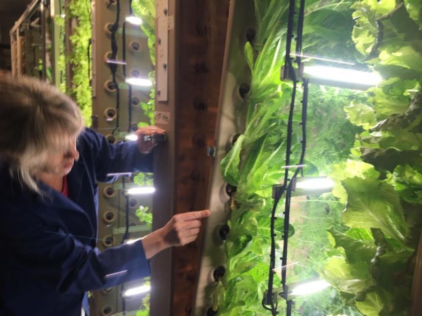 Amy Erfling peeks into the interior of an aeroponic garden panel.