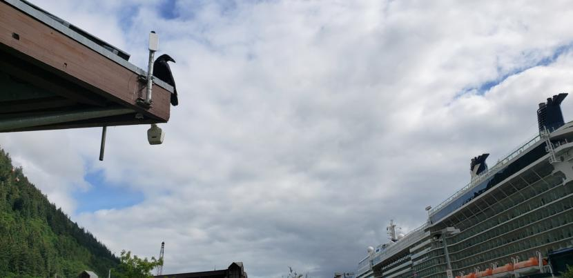 A raven sits next to a millimeter wave, high-capacity wireless backhaul on top of the Marine Park pavilion in downtown Juneau with the Celebrity Eclipse moored nearby on Aug. 15, 2019. The device connects a wireless hotspot in the pavilion to the internet, which the Juneau Public Library provides through SnowCloud Services during the cruise ship season, paid for with cruise ship passenger taxes.