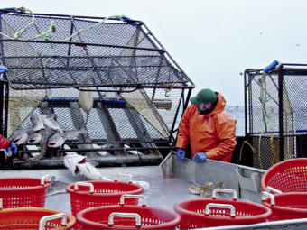 A man in an orange raincoat watches Pacific cod slide out of a black cage onto the boat.