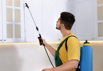 Finding Affordable Pest Control Services Near Me