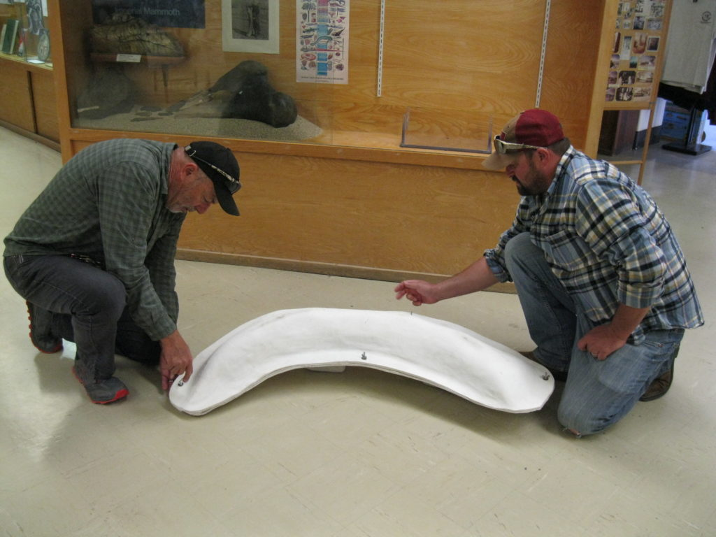 Image of two men preparing to take the proboscidean tusk out of its protective case at the Eastern California Museum