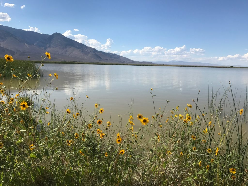 scenic picture of Klondike Lake with wild flowers and moutain.