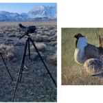 Protecting the Bi-State Sage Grouse: LADWP Announces Completion of The Long Valley Adaptive Management Plan for Bi-State Sage-Grouse