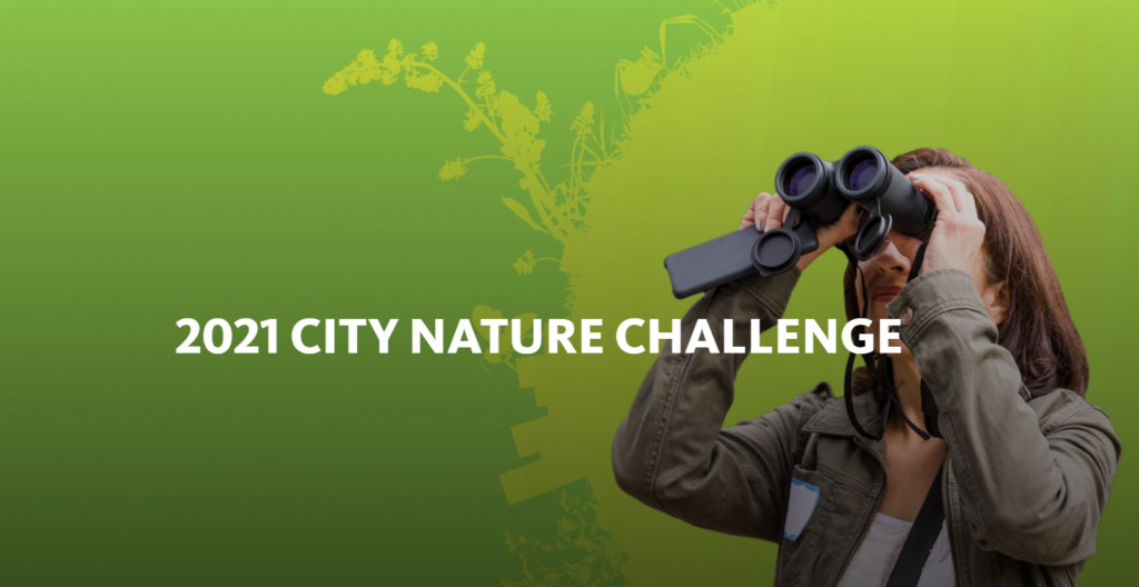 Image of a woman looking through binoculars with text that reads 2021 city nature challenge