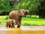 Sri lanka tourism elephant