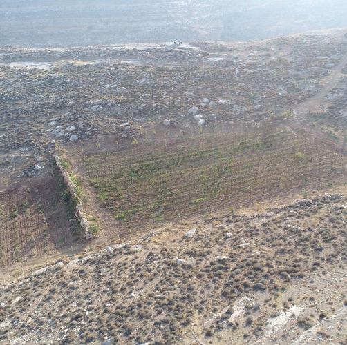 The Inside Story of The Arugot Farm Vineyard Demolition