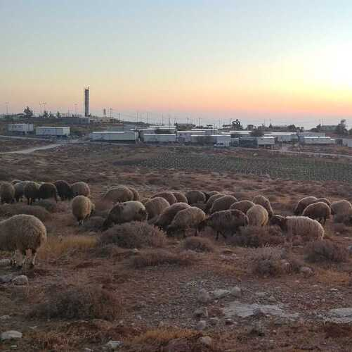 Judean Sheep, Clouds of Glory & a Sukkot Like No Other