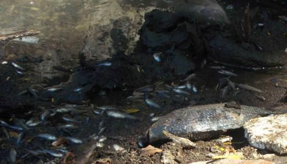 peces en Lista Roja, animales en especie de extinción