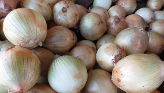 cebolla, cebolleros, Nicaragua, consumo de cebolla