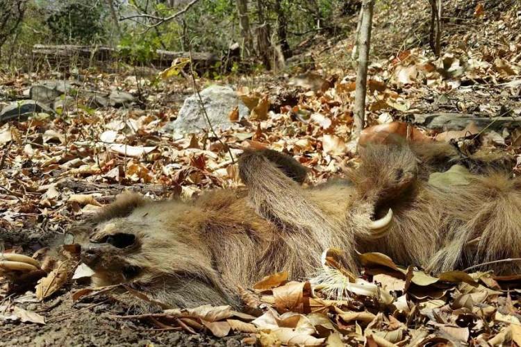 nicaragua, animales, sequía
