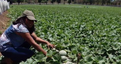 Ley de Fronteras, agricultura, Nicaragua