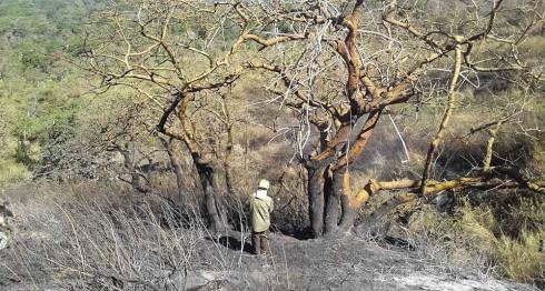 En el 2014 se registraron 339 incendios; en el 2015, 259 y en el 2016, 197 incendios, según cifras oficiales. LA PRENSA/ ARCHIVO