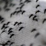 Suben a 12 los muertos por dengue en Nicaragua en 2019
