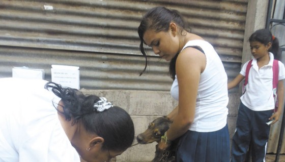 Nicaragua, rabia, perros, gatos