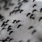 Más de cien mil casos de dengue sospechosos se registran en Nicaragua