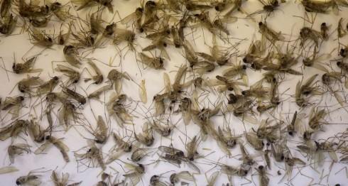 transmisor de zika