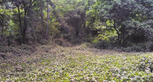 parque de ferias en Masaya