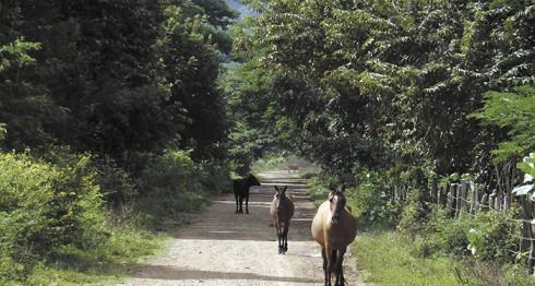 canal interoceánico, Gran Canal de Nicaragua, Wang Jing, Daniel Ortega