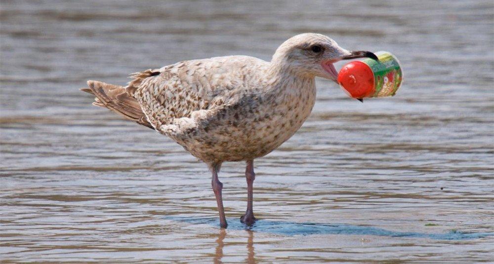 Casi-todas-las-aves-marinas-del-mundo-comen-plástico.jpg