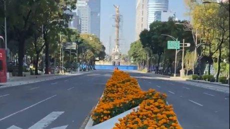 Cempasúchil Reforma.jpg